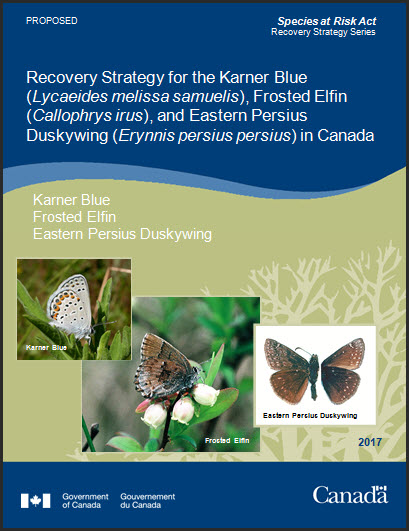 Recovery Strategy for the Karner Blue, Frosted Elfin and Eastern Persius Duskywing