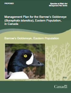 Cover of publication: Management Plan for the Barrow's Goldeneye (Bucephala islandica), Eastern Population, in Canada [PROPOSED] – 2011