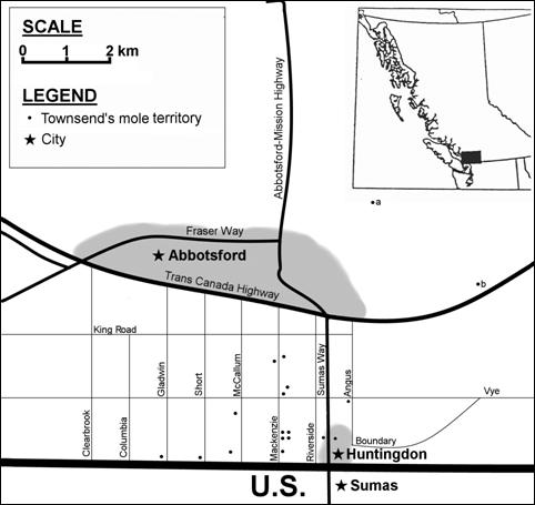 Figure 2.  The distribution of Scapanus townsendii townsendii in 2002 near Huntingdon and Abbotsford (city areas are shaded) in Canadabased on a recent field survey that located 16 territories by molehills visible from the road (indicated as black dots above the U.S. border). The area searched was between the Trans-Canada Highway to the north, the U.S. boundary to the south, Clearbrook Road to the west and Boundary/Whatcom Road to the east. There were 137 territories of the coast mole in the same area. A Townsend's mole was caught by a trapper in November 2001 east of Abbotsford at Lakeview golf course (a) and another at Marshall Road (b).