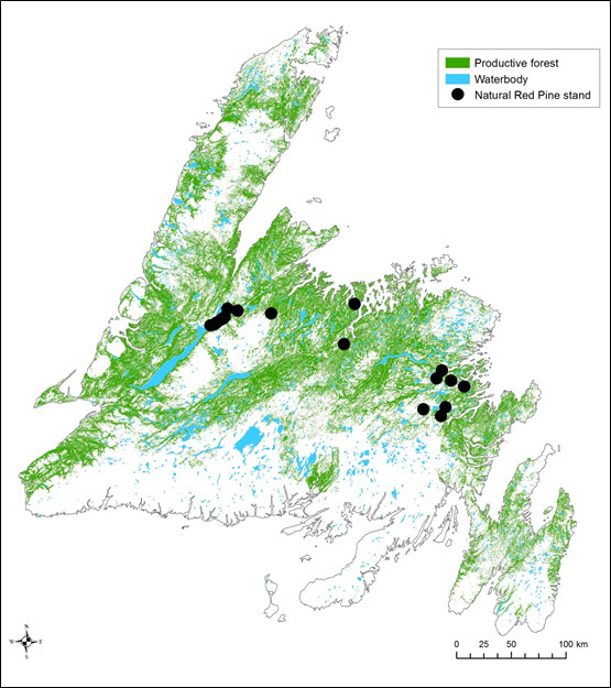 Map showing areas of productive forest in insular Newfoundland and Labrador (see long description below)
