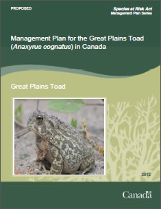 Cover page of the publication: Management Plan for  the Great Plains Toad (Anaxyrus cognatus) in Canada [PROPOSED] –  2012.