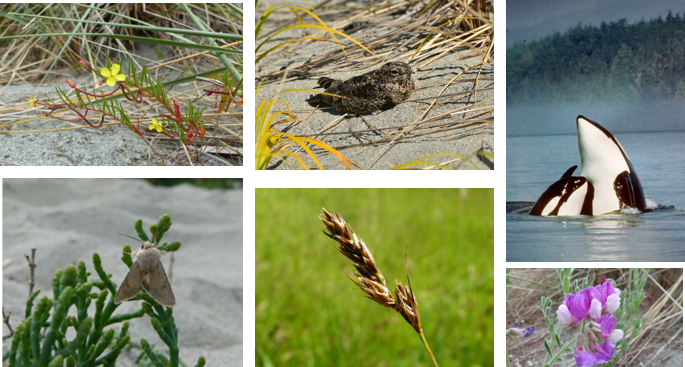 This is a collage of 6 photos, including a plant with a red stem, a bird standing on sand, orca whales, a moth, maybe wheat and a purple flower.