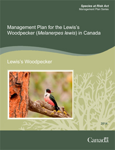 Cover of the publication: Management Plan for the Lewis's Woodpecker (Melanerpes lewis) in Canada [PROPOSED] – 2011.