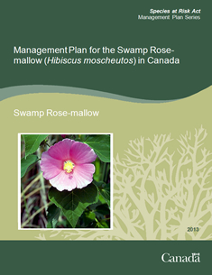 Cover page of the publication: Management Plan for the Swamp Rose-mallow (Hibiscus moscheutos) in Canada  –  2013.