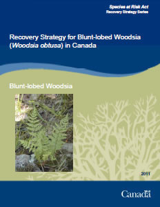 Cover of the publication: Recovery Strategy for Blunt–lobed Woodsia (Woodsia obtusa) in Canada – 2012