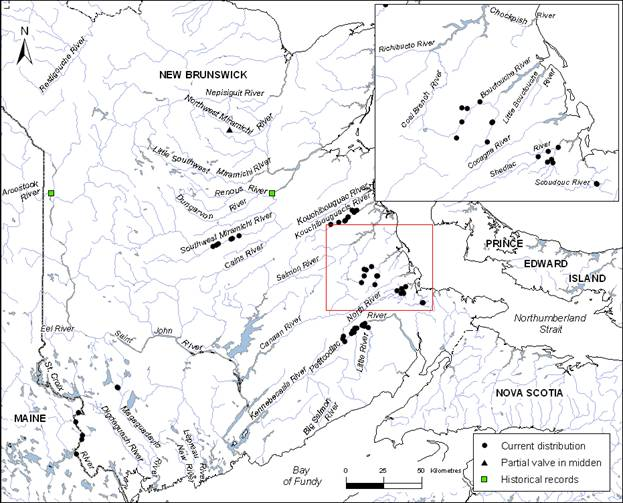 Map showing the current distribution of a partial valve found in a midden for the Brook Floater in New Brunswick. (See long description below)