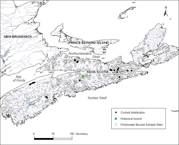 Map showing the distribution of Brook Floaters in Nova Scotia, with mussel sampling sites and a historical record.