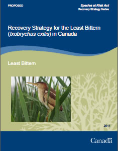 Cover of the publication: Recovery Strategy for the Least Bittern (Ixobrychus exilis) in Canada [PROPOSED] – 2011.
