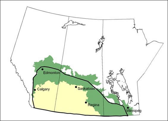 Figure 2 shows the Canadian distribution of the Sprague's Pipit. Two different colours were used to represent the distribution occurring within the Prairies region and within the parkland/boreal transition region.