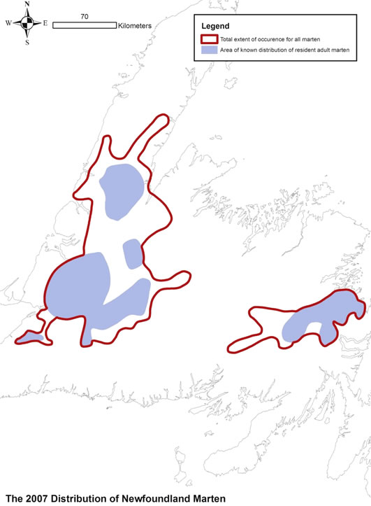 Figure 3 shows the extent of occurrence of the Newfoundland population of American Marten and the area of known distribution of residence adult marten, as of 2007.