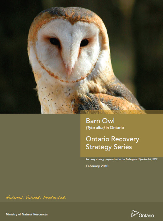 Species at Risk Public Registry - Recovery Strategy for ...