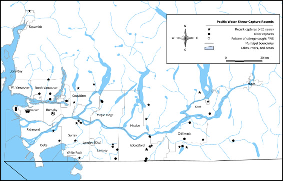 Figure 2 shows the location of Pacific Water Shrew capture records in southern British Colombia.