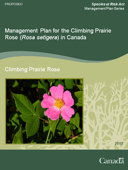 Cover page of the publication: Management Plan for the Climbing Prairie Rose (Rosa setigera) in Canada [Proposed] – 2013