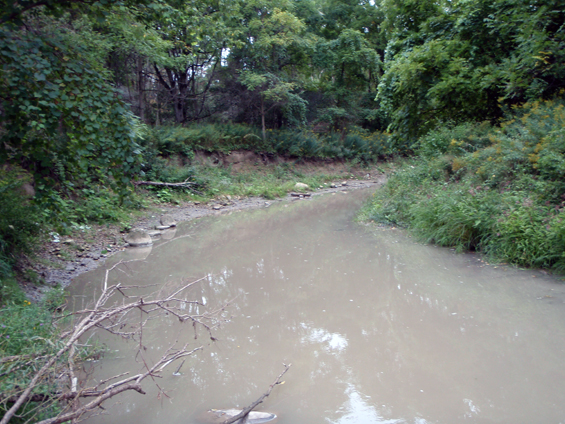 Photo of Crooked-stem Aster habitat at Kettle Creek, showing the creek as it passes through woodland.