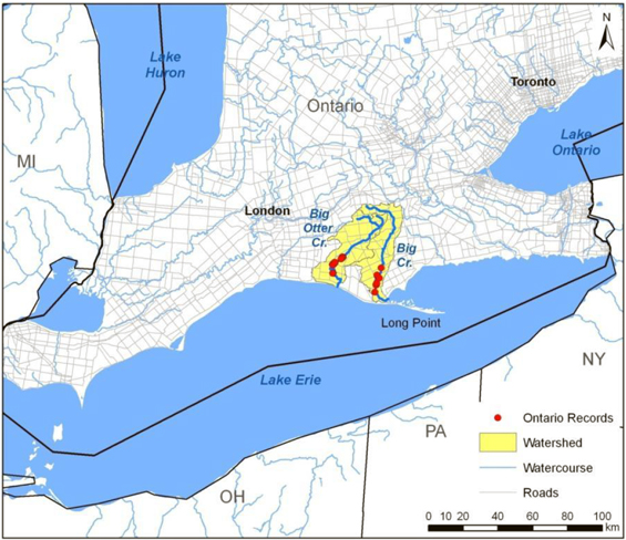 Map showing the distribution of the Riverine Clubtail in Ontario on Big Otter Creek and Big Creek.