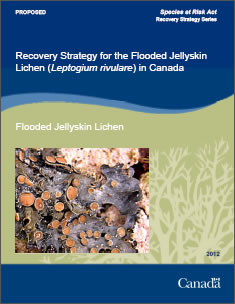 Cover of the publication: Recovery Strategy for the Flooded Jellyskin Lichen (Leptogium rivulare) in Canada [PROPOSED] – 2012.