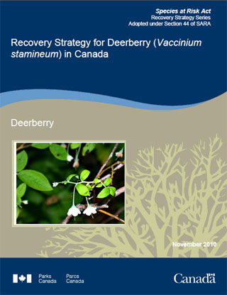 Species at Risk Act recovery strategy series, recovery strategy for the Deerberry (Vaccinium stamineum) in Canada.
