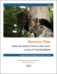 Cover page of the publication for Part 2: Recovery plan for the threatened Newfoundland population of American marten (Martes americana atrata).