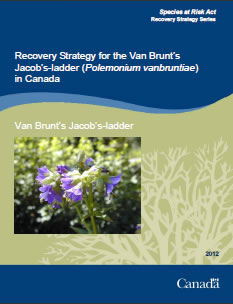 Cover page of the publication: Recovery Strategy for the Van Brunt's Jacob's-ladder (Polemonium vanbruntiae) in Canada.