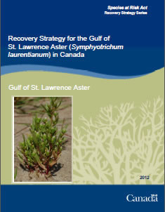 Cover of the publication: Recovery Strategy for the Gulf of St. Lawrence Aster (Symphyotrichum laurentianum) in Canada – 2012.