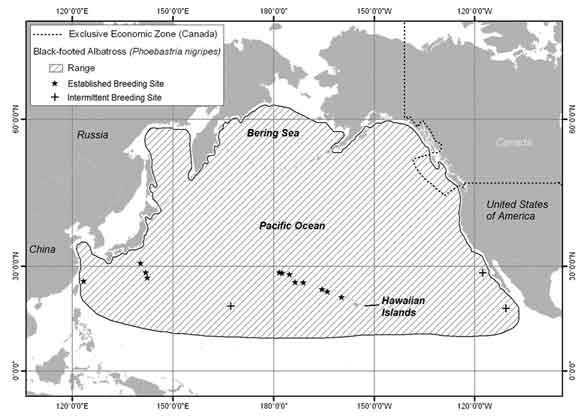 Map showinig Global at-sea and terrestrial range of Black-footed Albatross.  See detailed image description below