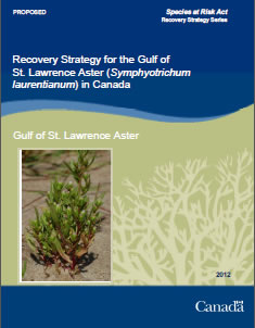 Cover of the publication: Recovery Strategy for the Gulf of St. Lawrence Aster (Symphyotrichum laurentianum) in Canada [PROPOSED] – 2012.