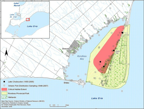 Critical habitat identified for the lake chubsucker in Rondeau Bay.