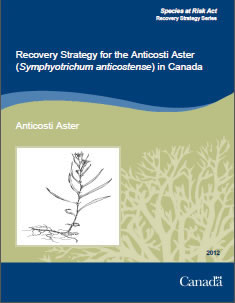Cover of the publication: Recovery Strategy for the Anticosti Aster (Symphyotrichum anticostense) in Canada – 2012.
