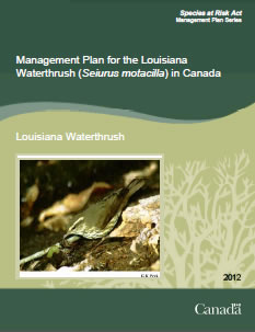 Cover of the publication: Management Plan for the Louisiana Waterthrush (Seiurus motacilla) in Canada – 2012.