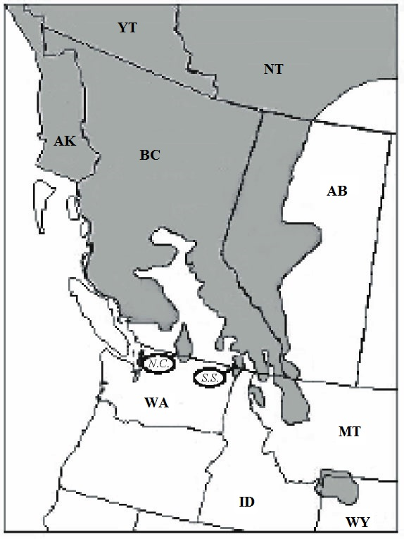 "a brief introduction to grizzly bears in alberta and their natural habitat ""the recovery plan sets thresholds for open route densities in grizzly habitat but the their natural heritage a long bears, alberta\'s grizzly population."