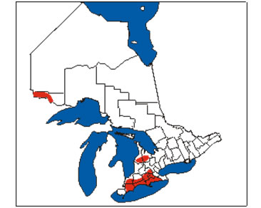 Figure 2 shows the Canadian distribution of the American Badger jacksoni subspecies in southern Ontario.