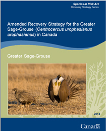 Cover page of the publication: Amended Recovery Strategy for the Greater Sage-Grouse (Centrocercus urophasianus urophasianus) in Canada [Proposed] - 2013