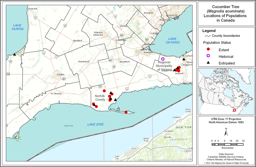 Figure 2 is a map that shows the location of extant, historical and extirpated populations of Cucumber Tree in southern Ontario. See detailed description below