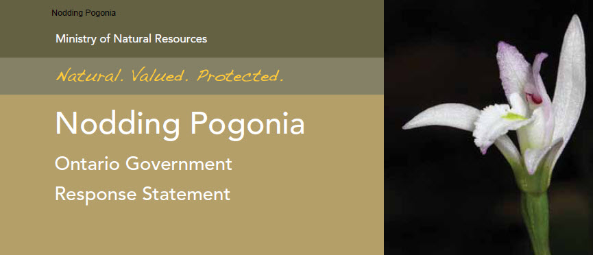 Cover Photo: Nodding Pogonia: Ontario Government Response Statement, prepared by the Ontario Ministry of Natural Resources