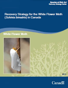 Cover of the publication on the Recovery Strategy – White Flower Moth.