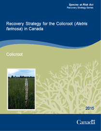 Cover page: Recovery Strategy for the Colicroot (Aletris farinosa) in Canada