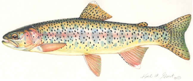 Female Trout Diagram - All Kind Of Wiring Diagrams •