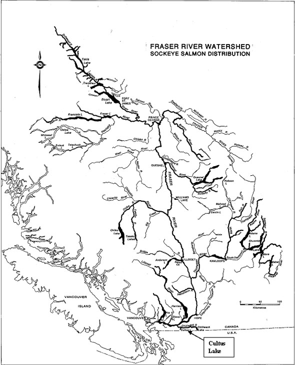 Map showing the distribution of Sockeye salmon populations in the Fraser River system.