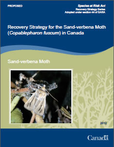 Cover page of the publication: Recovery Strategy for the Sand-verbena Moth (Copablepharon fuscum) in Canada [PROPOSED] – 2012.