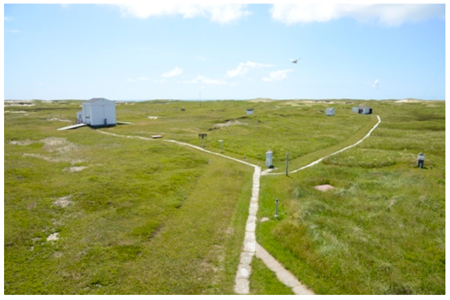 Photo of a Sable Island Sweat Bee collection site