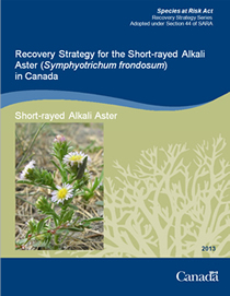Cover page of the publication: Recovery Strategy for the Short-rayed Alkali Aster (Symphyotrichum frondosum) in Canada – 2013