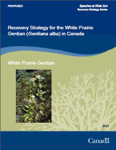 Cover of the publication: Recovery Strategy for the White Prairie Gentian (Gentiana alba) in Canada [PROPOSED] - 2011