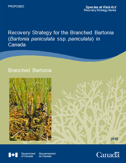 Cover photo of Branched Bartonia