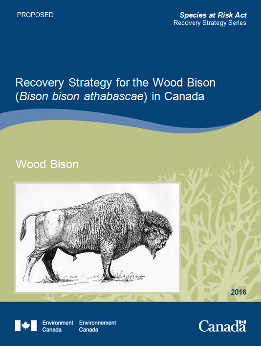 Recovery Strategy for the Wood Bison