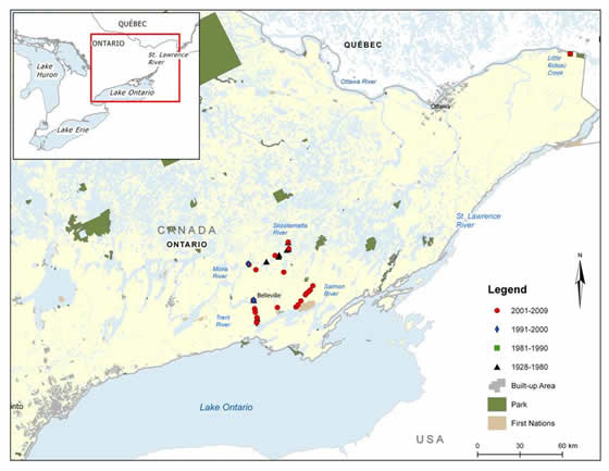 Figure 5. Channel Darter distribution in eastern Ontario. (See long description below)