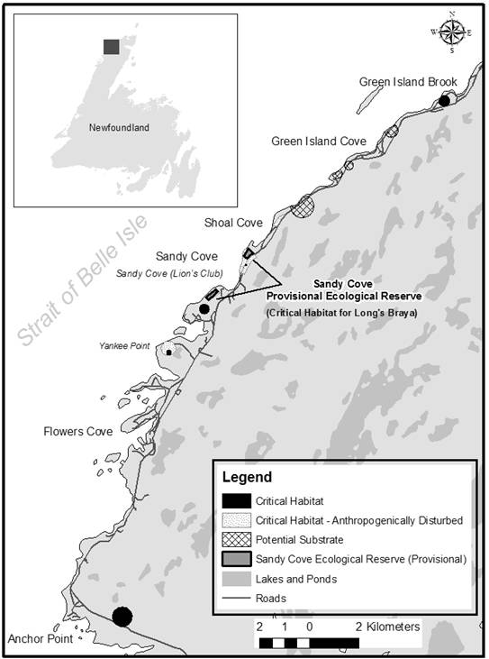 Figure 6 is a map showing locations of critical habitat for the Long's Braya throughout its historic range, from Anchor Point to Green Island Cove, on the limestone barrens of the Great Northern Peninsula of insular Newfoundland.