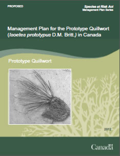 Cover of the publication: Management Plan for  the Prototype  Quillwort (Isoetes prototypus) in Canada [PROPOSED] - 2012.
