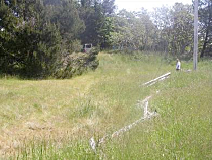 Habitat de la plagiobothryde odorante au cap Gurney, sur l'îleHornby. On a observé l'espèce dans la zone de végétation basse entre la clôture et les conifères.