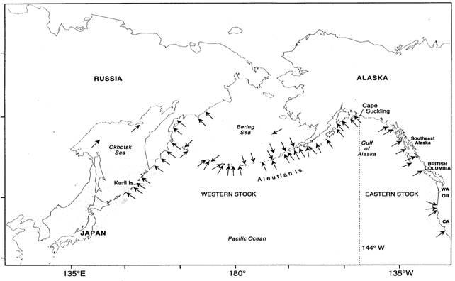 Figure 1. Aire de répartition mondiale de l'otarie de Steller. Les flèches indiquent les roqueries, et les zones ombrées, l'aire de répartition approximative des individus qui ne se reproduisent pas. La ligne pointillée illustre la séparation entre les stocks de l'Asie, de l'Est et de l'Ouest (adaptée d'une figure de Loughlin, 1997, et de Sease et al., 1999).